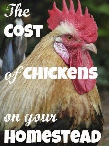 How much will your egg-laying chicken cost to raise and keep? At www.PintSizeFarm.com #chickens