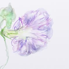 A morning glory #digitalwatercolor #ArtRage #expressionism #digital #watercolour #drawing #art