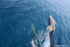 Croazieră la Muntele Athos - Grecia | Blog de Calatorii Whale, Animals, Whales, Animales, Animaux, Animal, Animais