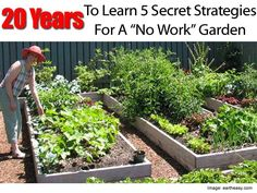 20 Years To Learn 5 Secret Strategies For A No Work Gardenhttp://plantcaretoday.com/20-years-learn-5-secret-strategies-work-garden.html