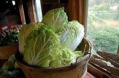 Napa cabbage (Chinese cabbage) nutrition facts and health benefits Asian Cabbage Salad, Chinese Cabbage, Cabbage Nutrition Facts, Napa Cabbage Recipes, Fried Cabbage, Cabbage Soup, Walnut Salad, Cupcakes, Asian Chicken