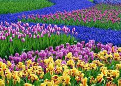 ▷ Frühlingsblumen im Haus oder im Garten bringen mehr Lebensfreude