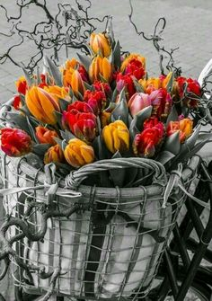 Color splash flowers