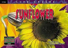 Sunflower (Life Cycles) by David M. Schwartz,http://www.amazon.com/dp/157471581X/ref=cm_sw_r_pi_dp_mZ.csb1E2Z4HA1M9