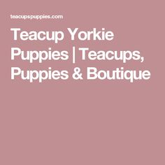 Teacup Yorkie Puppies | Teacups, Puppies & Boutique