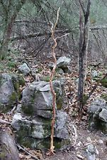 """69"""" Real Dog Wood Shoot of Yggdrasil Wood Wizard Staff of Norn Witches Wands + 2"""