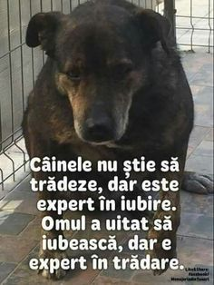 Adevarat 😉 True Words, Animals And Pets, Karma, Life Hacks, Life Quotes, Inspirational Quotes, Motivation, Feelings, Funny