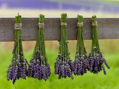 Outdoor Garden Decor, Nordic Interior, Medicinal Herbs, Herb Garden, Plant Hanger, Asparagus, Diy And Crafts, Health Fitness, Ale