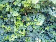Leaves+leaves= leaves~!!