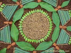 Mandala art made from tiny seed balls, buckeye leaf and budding blossoms...