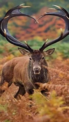 Majestic Animals, Rare Animals, Animals And Pets, Deer Pictures, Cute Animal Pictures, Beautiful Creatures, Animals Beautiful, Animals Amazing, Wild Animals Photography