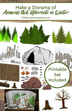In this post, we will show you how to make a diorama of animals that hibernate in Winter! It is the perfect afternoon craft to make on out cold wintry afternoon. It is the perfect activity to add to our animals in Winter. Winter Fun, Winter Theme, Animals That Hibernate, Animal Habitats, Arte Pop, Winter Activities, Preschool Crafts, Preschool Winter, Crafts To Make