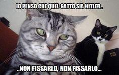 Risultati immagini per gatto incazzato facebook