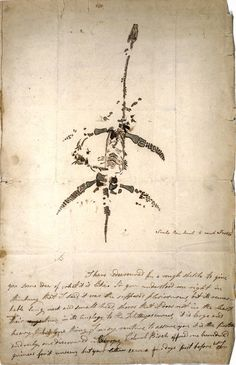 A letter and drawing from Mary Anning announcing the discovery of a fossil animal now known as Plesiosaurus dolichodeirus , dated December 26, 1823.  Mary Anning (1799–1847) was a British fossil collector, dealer, and paleontologist who became known around the world for a number of important finds contributing to fundamental changes in scientific thinking about prehistoric life and the history of the Earth.