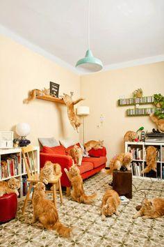 ginger cat(s)