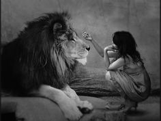 the value of a lion