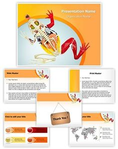 Animal Digestive System PowerPoint Presentation Template is one of the best Medical PowerPoint templates by EditableTemplates.com. #EditableTemplates #Stomach #Studying #Toad #Dissected #Animal Kidney #Digestive #Skull And Crossbones #Animal Skull #Section #Anatomic #Animal Skeleton #Anatomy #Internal #Body #Healthcare And Medicine #System #Map #Animal Heart #Medicine #Vessel #Veterinary Medicine #Scheme #Animal Body #Cardiac #Muscle #Doll #Animal #Order #Circulatory