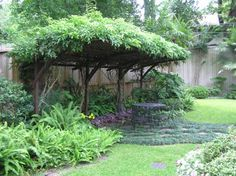 An evergreen wisteria provides lush shade on an arbor in the Short garden.