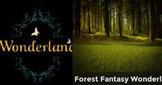 Forest Fantasy Wonderland | What is Your Wonderland Like?