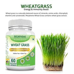 Morpheme Wheatgrass For Energy & Boosting Immunity. - Helps detoxify and rejuvenates, helps manage energy levels, naturally boosts the immune system, alkalizing superfood.