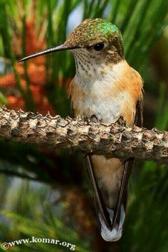 Hummingbird Feeder Discover Checking out the photographer!-Love it when they stop and pose for you! Small Birds, Colorful Birds, Little Birds, Polo Sul, Polo Norte, Pretty Birds, Love Birds, Beautiful Birds, Baby Hummingbirds