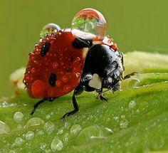 dew on my wings