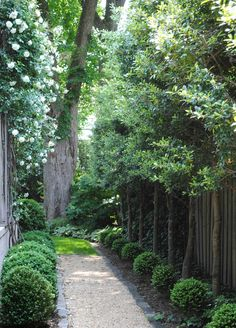 Boxwood and gravel corridor landscaping via http://toneontoneantiques.blogspot.com/ The trees are limbed up Foster Hollies per photographer/writer/designer Loi Thai. Stunning. Want some!