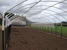 The 10 Best greenhouse ideas Large Greenhouse, Cheap Greenhouse, Aquaponics Greenhouse, Backyard Greenhouse, Greenhouse Growing, Aquaponics Diy, Greenhouse Plans, Backyard Farming, Hydroponic Gardening