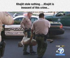 Khajiit+Is+Innocent