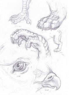 Gryphon details study by on DeviantArt Animal Sketches, Animal Drawings, Cool Drawings, Monster Drawing, Anatomy Sketches, Drawing Studies, Reptiles And Amphibians, Anatomy Reference, Creature Design