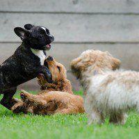 [:it]Razze cane[:] - razze cani #dogs #puppy #dogbreeds #dog #pets