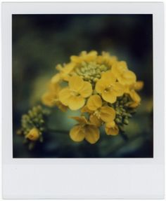 polaroid flower - not mine - wish it was