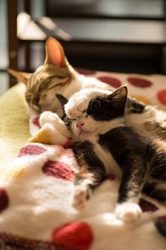 Cat and Kitten Snuggling                                                                                                                                                     More