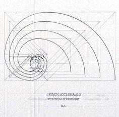 Fibonacci Spirals by Rafael Araujo