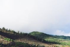 Nice view in the forest. Find out how to build your zero energy , sustainable house here.