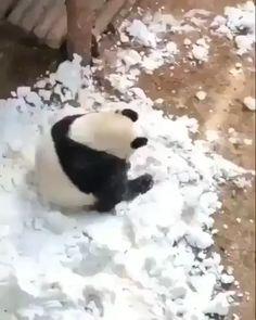 Panda doing some rolling in the snow. , Panda doing some rolling in the snow. Baby Animals Super Cute, Cute Little Animals, Cute Funny Animals, Funny Panda Pictures, Cute Animal Pictures, Cute Animal Videos, Animal Jokes, Cute Panda, Pet Birds