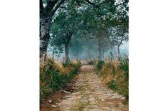 NG - Os dez dias mais bonitos da caminhada, em toda a Europa, estão num trecho chamado Le Puy Route