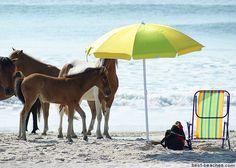 Assateague State Park...where the horses roam free