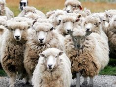 Wolf in Sheep's clothing - Worth1000 Contests