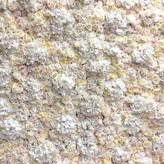 Ivory Artificial Flower Wall Backdrop Hire #flowerwall #flowerbackdrop