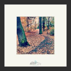 Endcliffe Autumn  Sheffield Park Nature Tree by TheLittleSquares