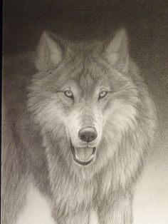 Wolf, Renso Tamse