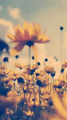Summer-Flower-Sepia.jpg (640×1136)
