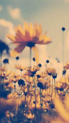Summer-Flower-Sepia.jpg 640×1,136 pixels
