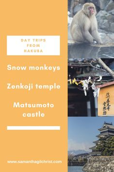 Looking for things to do in Hakuba Japan? This blog shares a few day trip suggestions while based in Hakuba. To read about our adventures to the Snow Monkey Park, Zenkoji Temple and Matsumoto Castle, visit: https://www.samanthagilchrist.com/ (Photos by Samantha Gilchrist)