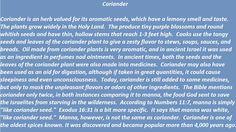 Coriander in biblical times
