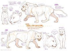 How to draw lions and cougars/mountain lions!