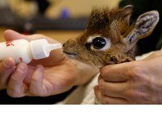 Animales Cuando Bebés