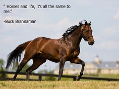Horses and life.