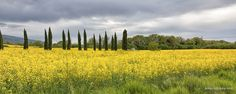 A Panoramic photograph taken in the fields of Tuscany.  One of the nicest landscapes locations in Europe, I have ever visited.  Under the Tuscan Sun | by Reuben Chircop @rchircop.com Photography